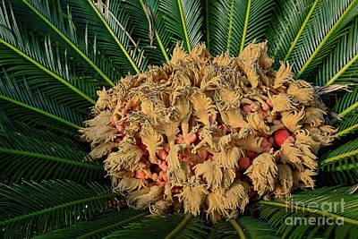 Photograph - Cycad Plant By Kaye Menner by Kaye Menner