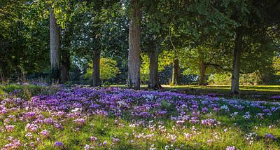 Photograph - Cyclamen Under Trees by Judith Barath