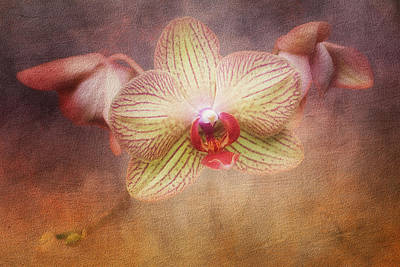 Red Bud Photograph - Cymbidium Orchid by Tom Mc Nemar