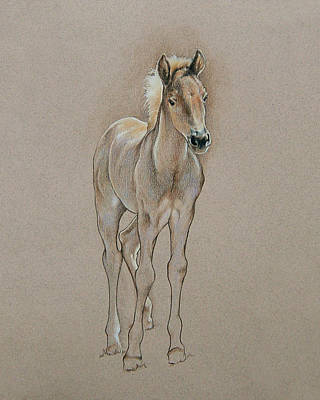 Cyndee's Foal Art Print by Cindy Davis