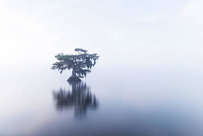 Cypress In Heavy Fog Art Print