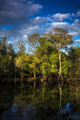 Overhang Photograph - Cypress And Oaks by Marvin Spates