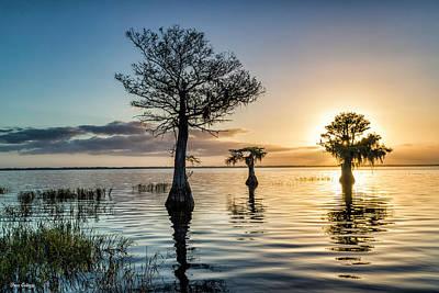 Photograph - Cypress At Dawn by Fran Gallogly
