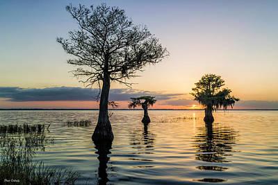 Photograph - Cypress At Sunrise by Fran Gallogly