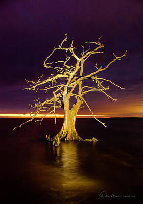 Best Sellers - Dan Beauvais Royalty-Free and Rights-Managed Images - Cypress at Sunset 2860 by Dan Beauvais