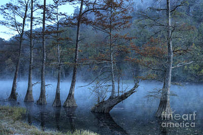Art Print featuring the photograph Cypress Awakening by Tamyra Ayles