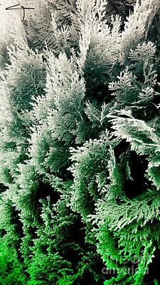 Cypress Branches No.5 Art Print