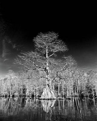 Photograph - Cypress Contrast by Alan Raasch