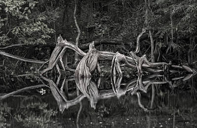 Art Print featuring the photograph Cypress Design by Steven Sparks