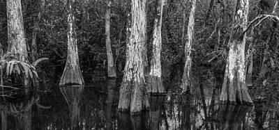 Photograph - Cypress Elders by Jon Glaser