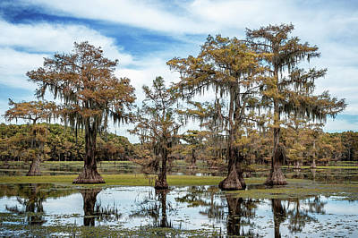 Photograph - Cypress Expression  by Sheena LeAnn