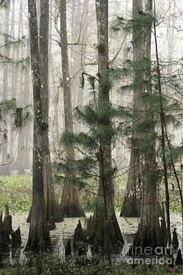 Photograph - Cypress Fog by Myrna Bradshaw