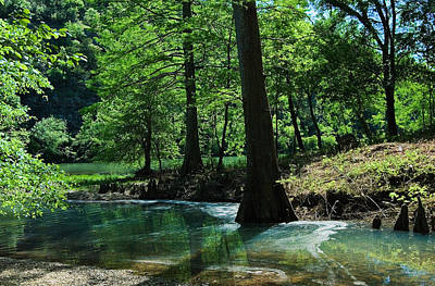 Cypress Forest In Summer Art Print