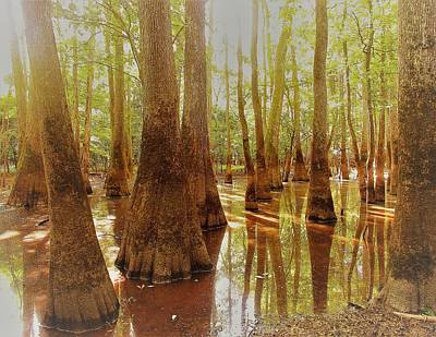 Photograph - Cypress Forest Swamp by Joshua Bales