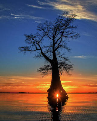 Photograph - Cypress Glow by Alan Raasch