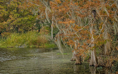 Photograph - Cypress Grove by Jane Luxton