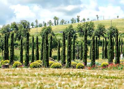 Photograph - Cypress Heaven by Dorothy Berry-Lound