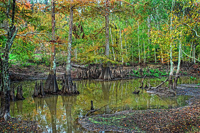 Photograph - Cypress In Autimn by Ron Weathers