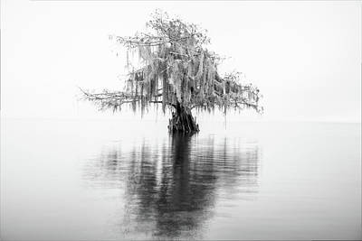 Photograph - Cypress In Black-and-white by Andy Crawford