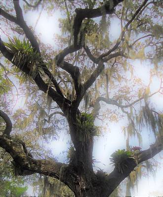 Digital Art - Cypress In The Mist by Ann Johndro-Collins