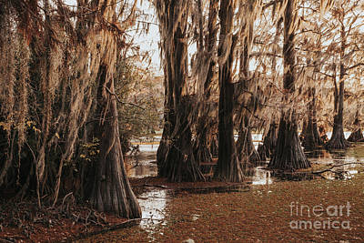 Photograph - Cypress In The Route by Iris Greenwell