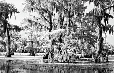 Photograph - Cypress Infrared by Lana Trussell