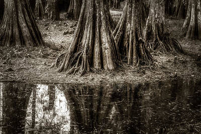 Photograph - Cypress Island by Andy Crawford