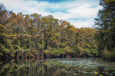 Photograph - Cypress Jungle by Sheena LeAnn