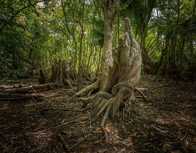 Photograph - Cypress Knees by Bill Martin