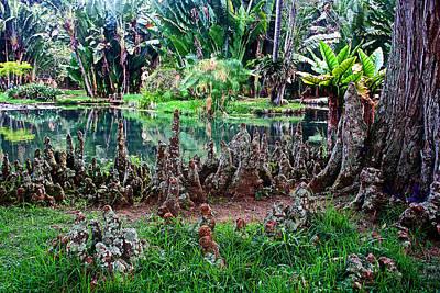 Cypress Knees In Botanical Garden Of Rio De Janeiro-brazil  Art Print by Ruth Hager
