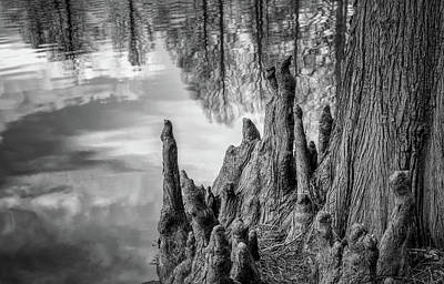 Photograph - Cypress Knees In Bw by James Barber
