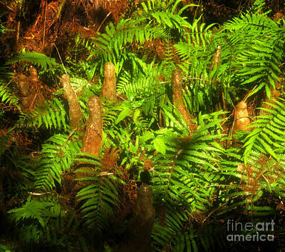 Cypress Knees In Ferns Art Print