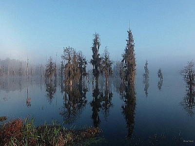 Priska Wettstein Land Shapes Series - Cypress Lake by Gina Welch