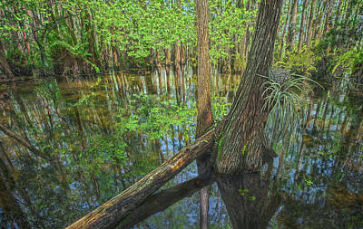 Cypress Log, Florida Everglades Art Print by Jennifer