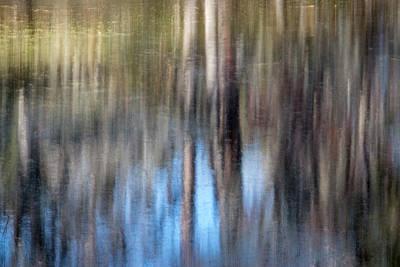 Photograph - Cypress Longings by Nicole Robinson
