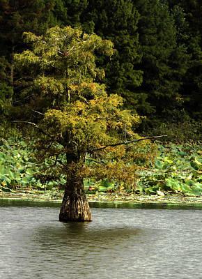 Photograph - Cypress Matters by Jeff Kurtz