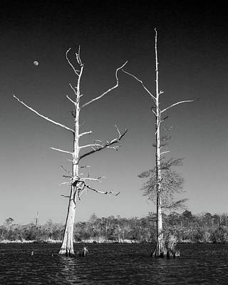Photograph - Cypress Moon by Alan Raasch