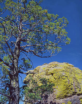 Photograph - Cypress Over Boulder by Tom Daniel