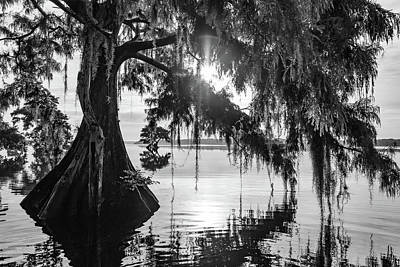 Photograph - Cypress Perspective by Stefan Mazzola