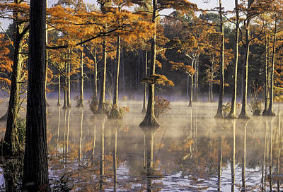 Photograph - Cypress Pond 04 by Jim Dollar