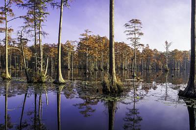 Photograph - Cypress Pond 05 by Jim Dollar