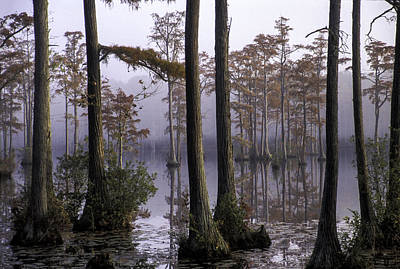 Photograph - Cypress Pond 09 by Jim Dollar