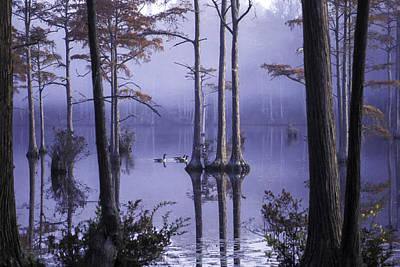 Photograph - Cypress Pond 11 by Jim Dollar