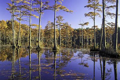 Photograph - Cypress Pond 12 by Jim Dollar