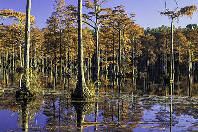 Photograph - Cypress Pond 16 by Jim Dollar