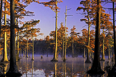 Photograph - Cypress Pond 17 by Jim Dollar