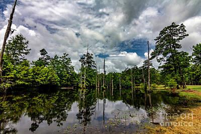 Photograph - Cypress Pond by Ken Frischkorn