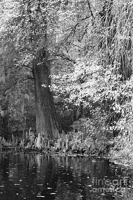 Photograph - Cypress Pond Reflections II Bw by Mary Haber