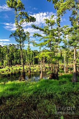 Photograph - Cypress Pond Three by Ken Frischkorn