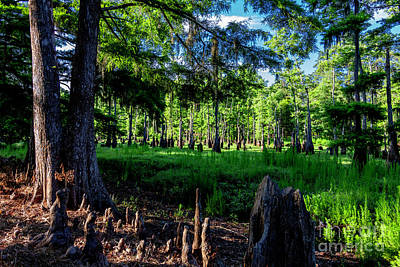 Photograph - Cypress Pond Two by Ken Frischkorn